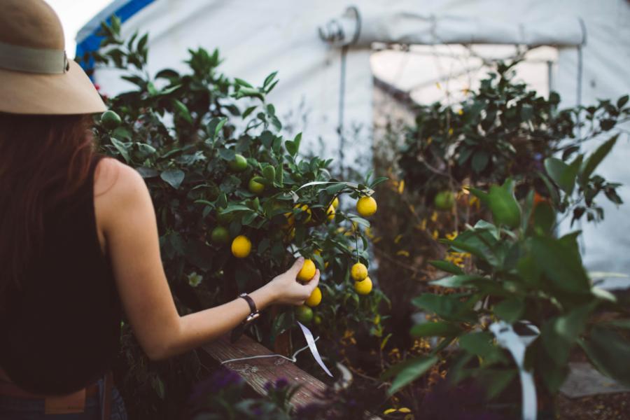 Pourquoi le citron et le plein air vont si bien ensemble