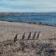 Naviguer dans le Grand Sud: Du Nord au Sud de l'Argentine